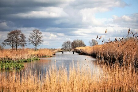 Holland op z'n mooist - Een lekkere wandeling met echte Hollandse omstandigheden. - foto door dickgijsbertsen op 15-04-2021 - locatie: Reeuwijkse Hout, 2811 NW Nederland - deze foto bevat: wolk, water, lucht, fabriek, watervoorraden, ecoregio, natuurlijk landschap, natuurlijke omgeving, boom, afdeling