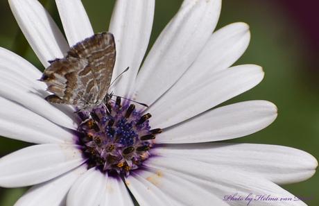 Vlindertje...