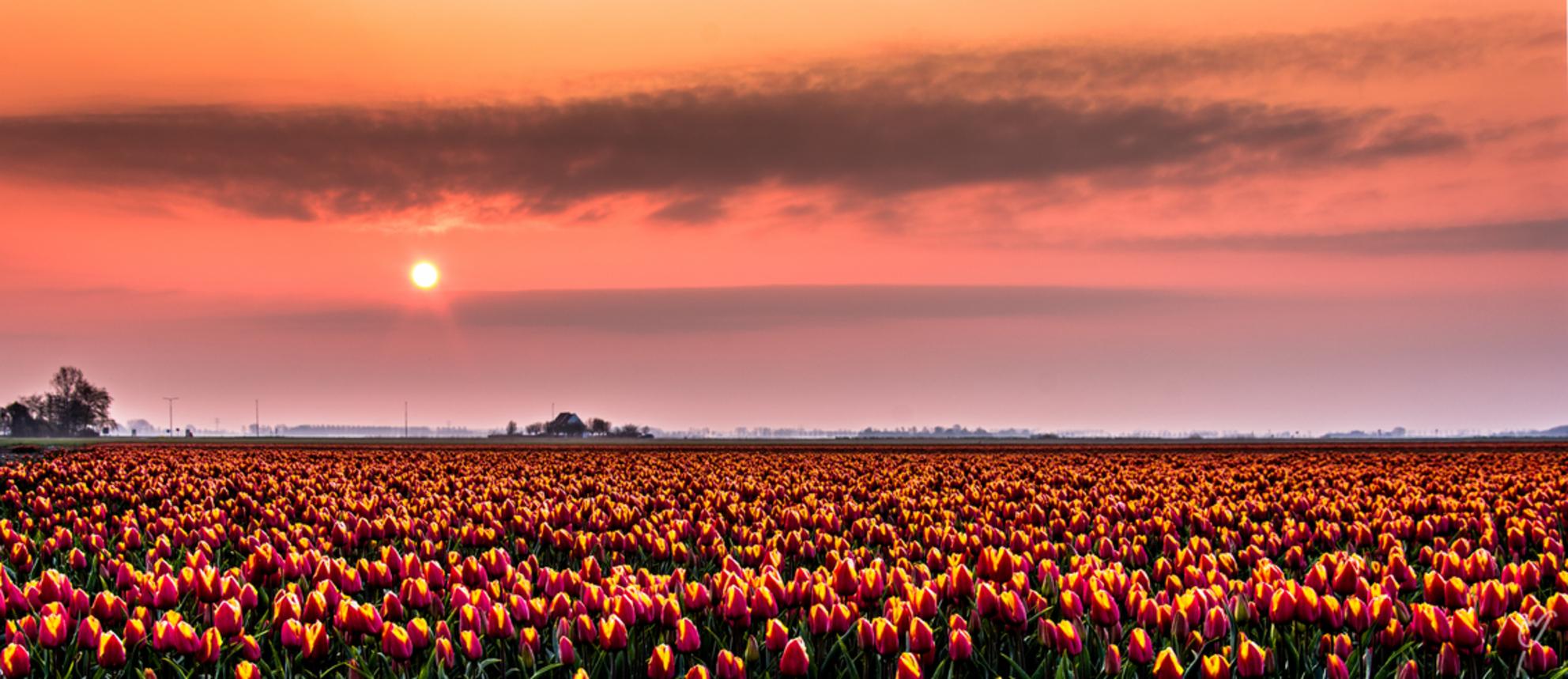veld vol zonnetjes - - - foto door wardkeijzer op 18-02-2020 - deze foto bevat: lucht, wolken, panorama, lente, licht, vakantie, landschap, mist, tegenlicht, zonsopkomst, sfeer, polder, tulpenveld - Deze foto mag gebruikt worden in een Zoom.nl publicatie