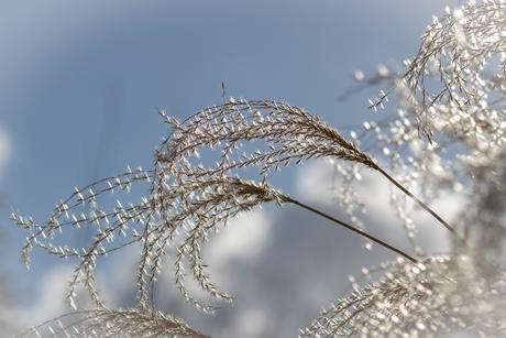 Mooi winterweer