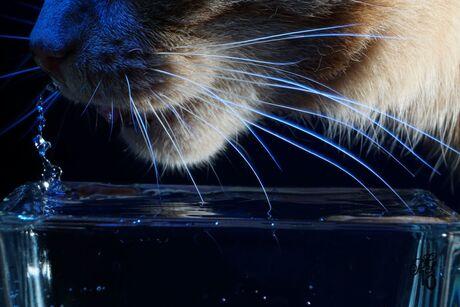 Druppel kat II