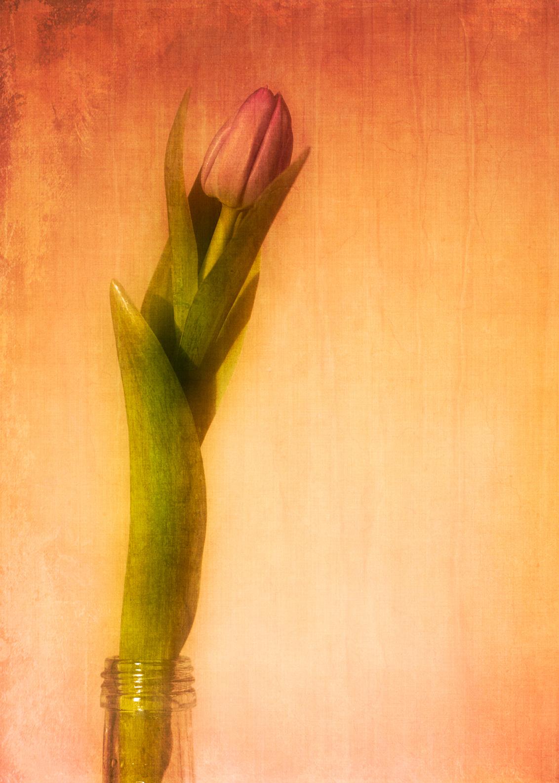 tulp - - - foto door fotostad op 03-03-2021 - deze foto bevat: bloem, lente, natuur, tulp, structuur, fantasie, schilderij, vintage, bewerking, sfeer, photoshop, creatief, textuur, tonemapping, bokeh, bewerkingsuitdaging, meervoudige belichting