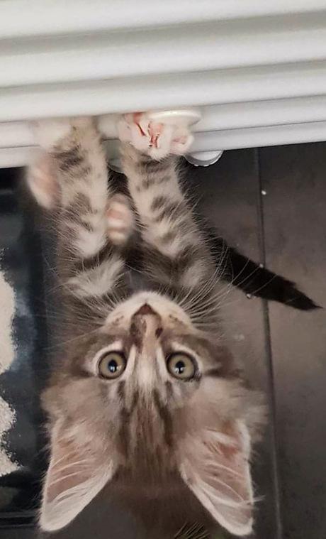 Hoe klim ik op een radiator