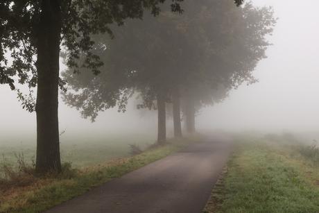 """""""Broek"""" in de mist"""
