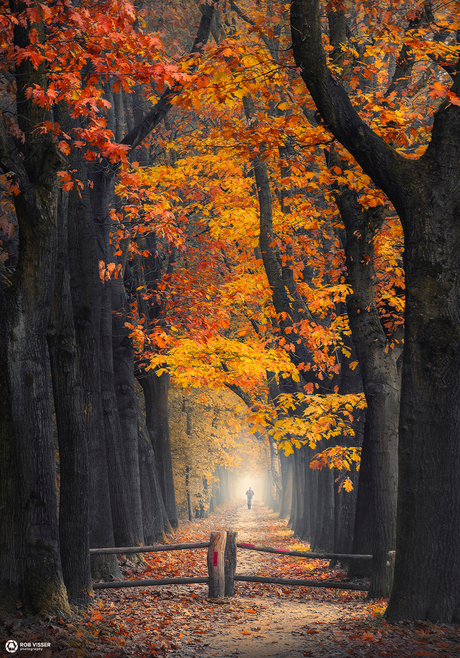 Seasons stroll