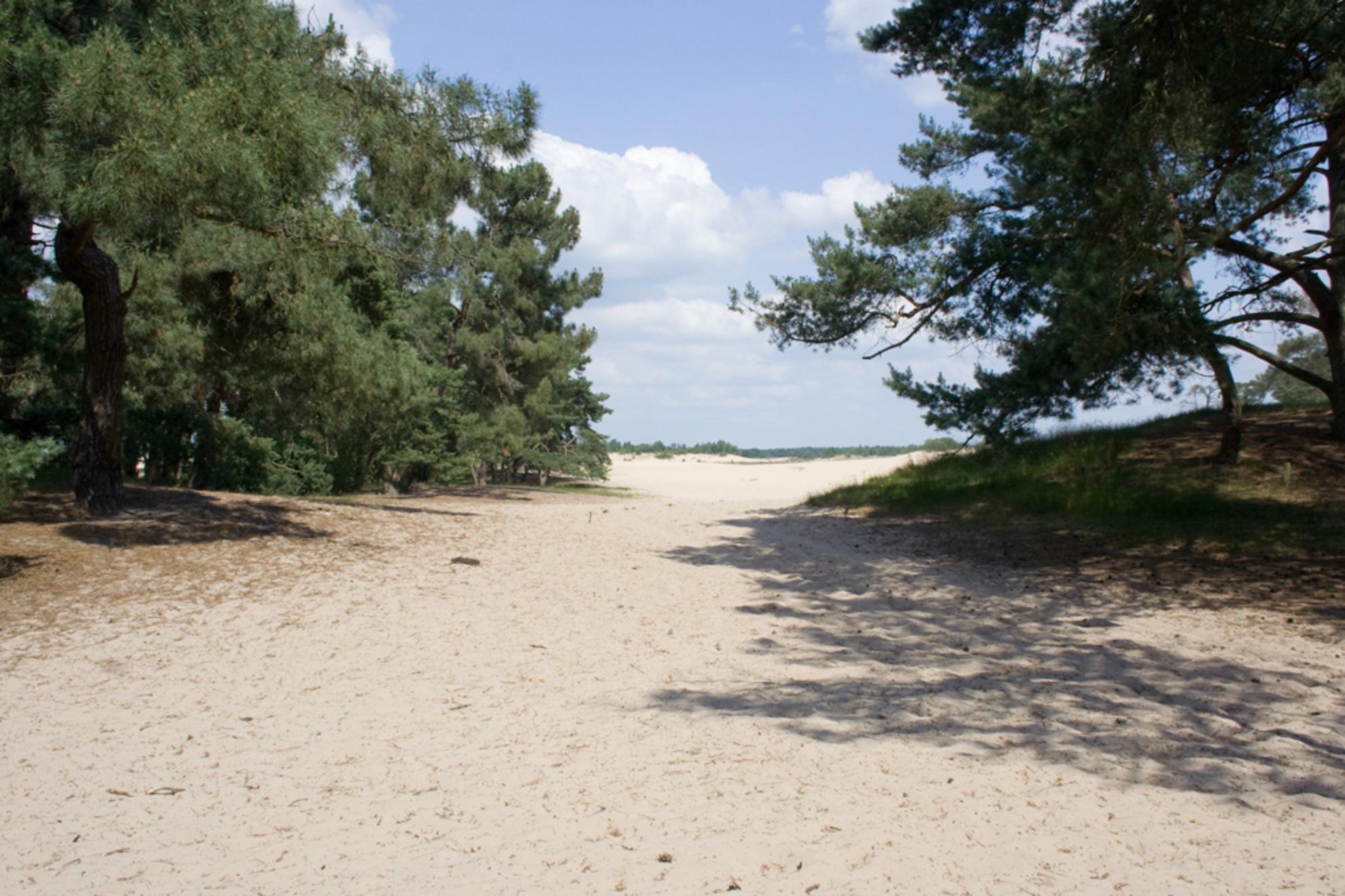 Loonse en Drunense duinen 1 - Op 23 juni waren wij 20 jaar getrouwd. Om die dag te vieren zijn we naar de Loonse en Drunense duinen geweest. Erg mooi was het daar. En daarom een k - foto door CorKnobbe op 09-07-2009 - deze foto bevat: landschap, duinen, zand, Loonse en Drunebse duinen