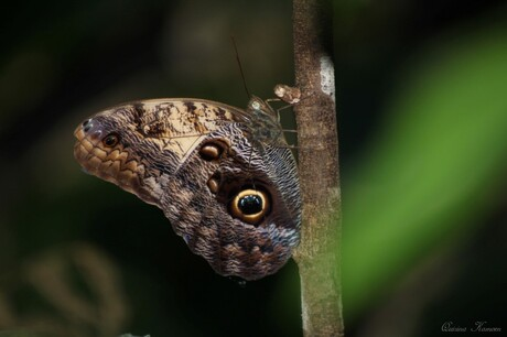 Vlinder Wildlands