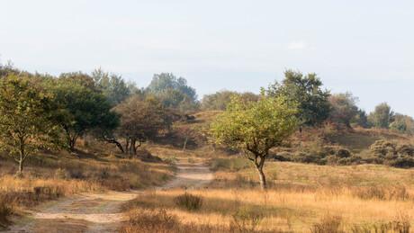 Landschap AWD