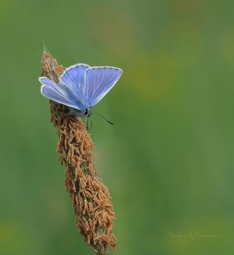 Blauw, Blauwer, Blauwst.
