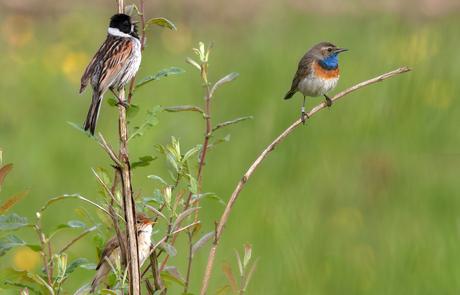 Elk vogeltje zingt zoals het gebekt is...