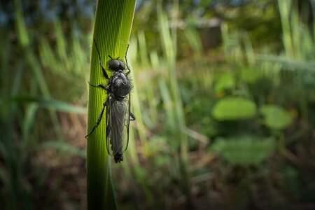 Bibio Marci / Rauwvliegje - Tijdens een wandeling door het gemeente parkje viel mijn oog op een nest rauwvliegjes ze kwamen 1 voor 1 uit de grond en klommen in de grassprieten i - foto door marcojongsma op 20-04-2020 - deze foto bevat: groen, macro, wit, zon, water, lente, natuur, vlieg, zweefvlieg, geel, licht, zwart, tegenlicht, zomer, insect, vlindertuin, bokeh, rauwvlieg