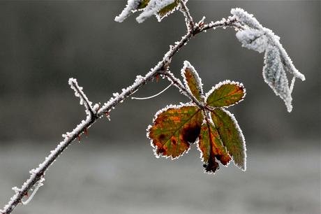 Herfstkleur in de winter