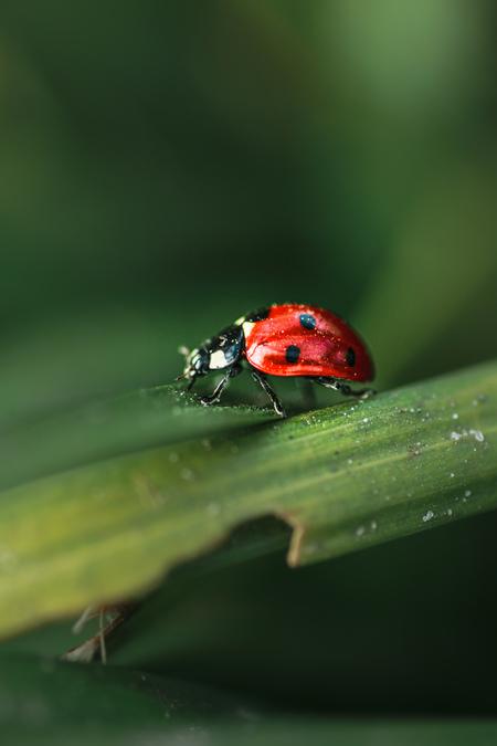IMG_3981 - - - foto door maritabma op 05-03-2021 - deze foto bevat: macro, natuur, lieveheersbeestje, insect