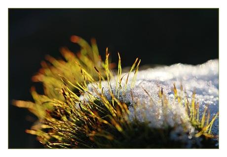 Mini winterlandschap