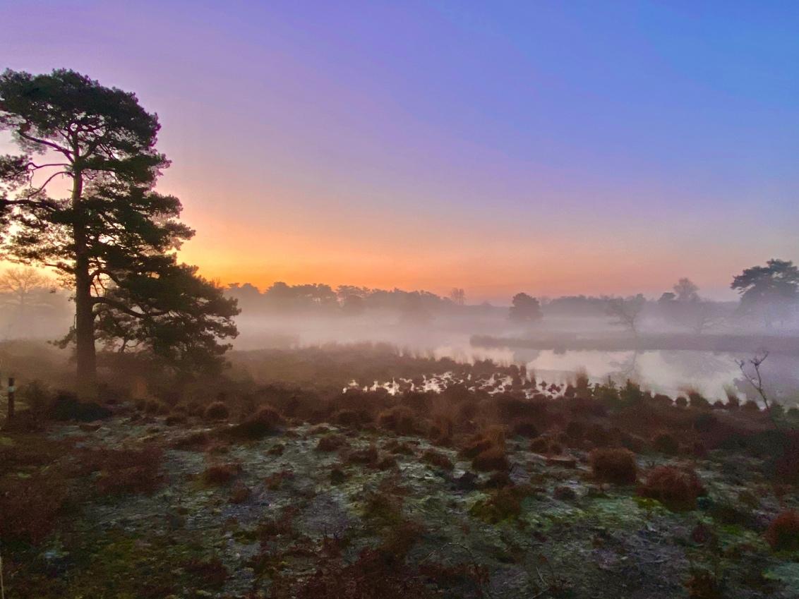 Kleurrijke vroege uurtjes - - - foto door Iphonephotographysuus op 01-03-2021 - deze foto bevat: zon, water, natuur, mist, bos, zonsopkomst