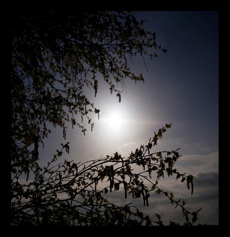 Tegenlicht......
