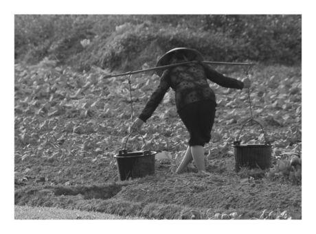 Landbewerking Hai Phong