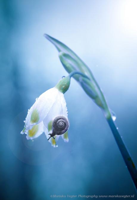 Rainy spring