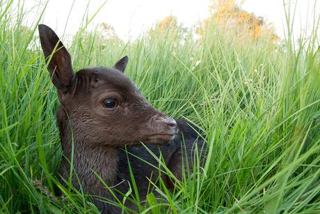 Bambi in het Kanaal