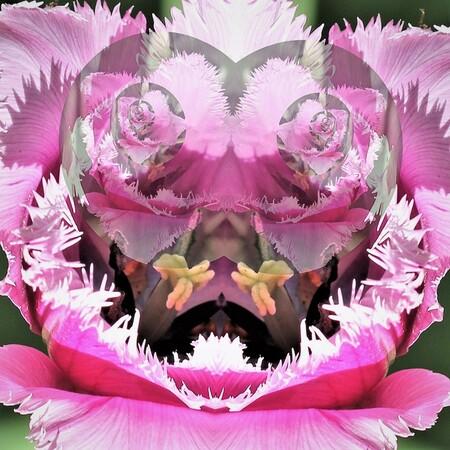 177 - het is een tulp die heb bewerkt - foto door ltomey op 04-01-2021