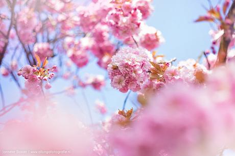 Pink Blossom #2