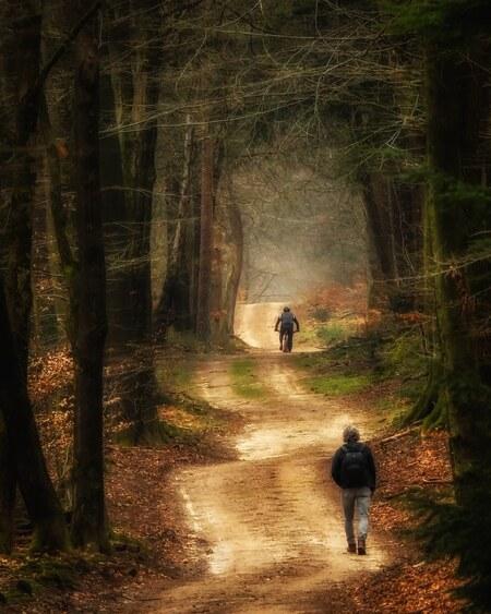 Bike or hike - - - foto door 19jannie64 op 08-03-2021 - deze foto bevat: groen, lucht, natuur, geel, licht, winter, landschap, bos, zonsopkomst, bomen, zand, goud, fotograferen, wandelen, fietsen, sprookjesachtig, speulderbos, magisch