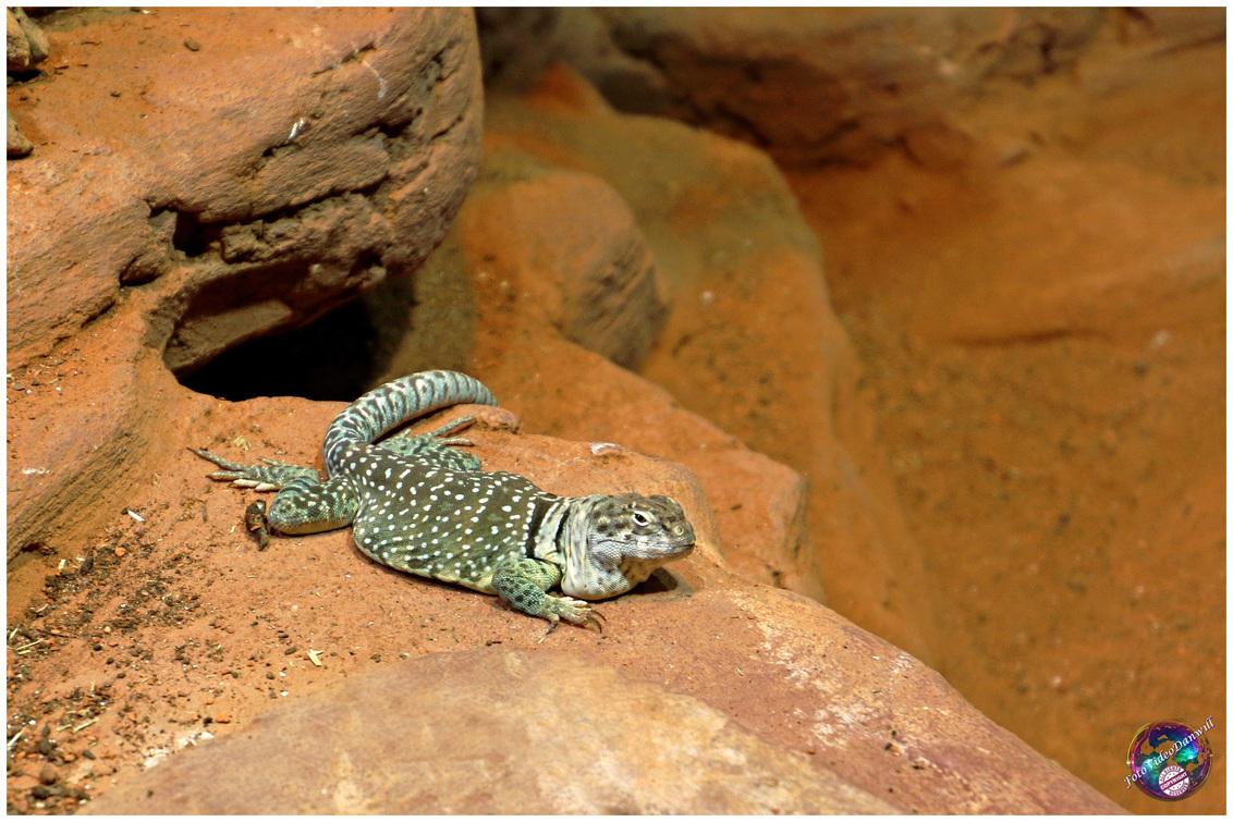 Oké, wat vergeten ... - - - foto door willemdanker op 03-01-2019 - deze foto bevat: dierentuin, hagedis, reptiel, amersfoort
