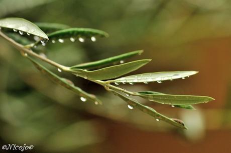 Veel regen....