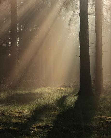 straling in het bos