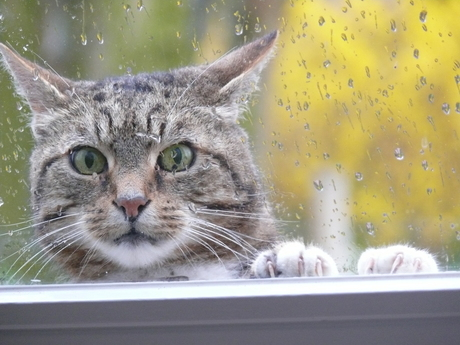 mag ik binnenkomen?