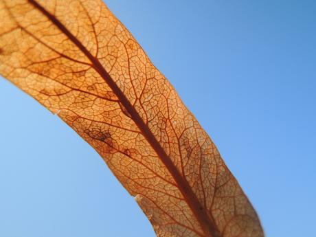 01-05-13 Leaf