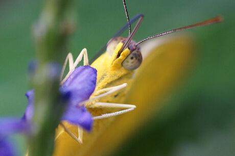 Close-up in vlindertuin