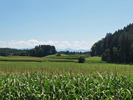 Landschap rondom de Bodensee, Duitsland