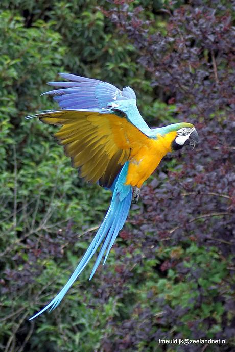 Blijven prachtige vogels