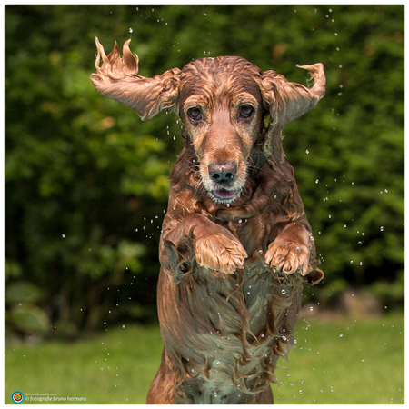 Luka - Luka - foto door brunohermans op 31-08-2015 - deze foto bevat: huisdier, hond