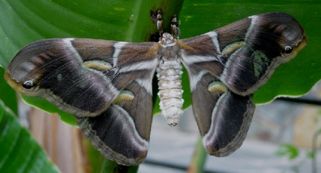 Close up nachtvlinder