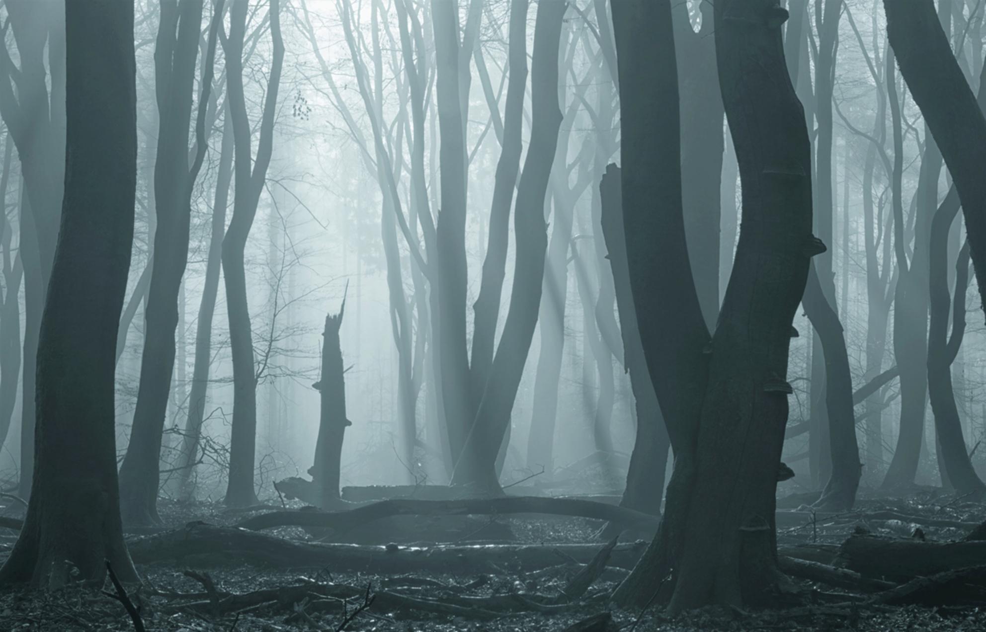 De dappere - Na de mist een tijdje achterna te zijn gehobbeld vond ik deze plek. Ik zocht naar een bijzondere boom en deze kleinere viel mij op tussen de grote jo - foto door pslagmolen op 02-03-2021 - deze foto bevat: panorama, natuur, veluwe, winter, landschap, mist, bos, zonsopkomst, bomen, zonnestralen, speuldersbos, lange sluitertijd - Deze foto mag gebruikt worden in een Zoom.nl publicatie