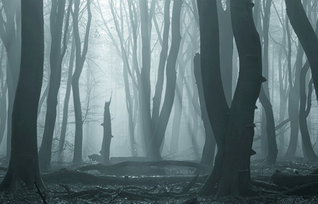 De dappere - Na de mist een tijdje achterna te zijn gehobbeld vond ik deze plek. Ik zocht naar een bijzondere boom en deze kleinere viel mij op tussen de grote jo - foto door pslagmolen op 02-03-2021 - deze foto bevat: panorama, natuur, veluwe, winter, landschap, mist, bos, zonsopkomst, bomen, zonnestralen, speuldersbos, lange sluitertijd