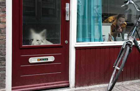 A dog's life - On the Streets. - foto door yurivangeenen op 09-04-2013 - deze foto bevat: yuri van geenen, on the streets