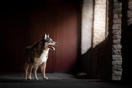 Oude hond in het zachte licht