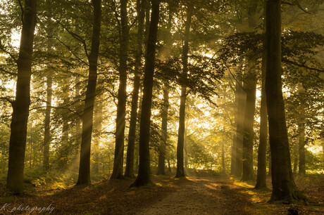 sunrays between the leaves