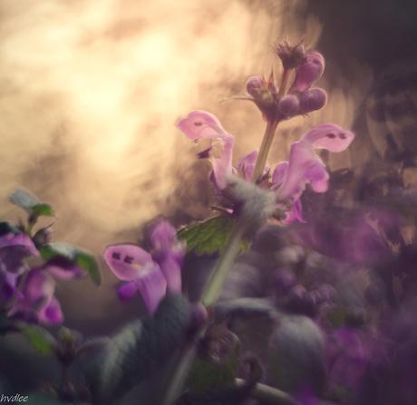 een simpele bloem