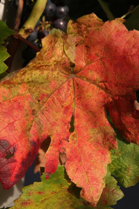 Herfst - We kunnen er niet meer omheen, de zomer is voorbij. - foto door petervanmeurs op 23-09-2010 - deze foto bevat: herfst, blad, herfstblad, petervanmeurs