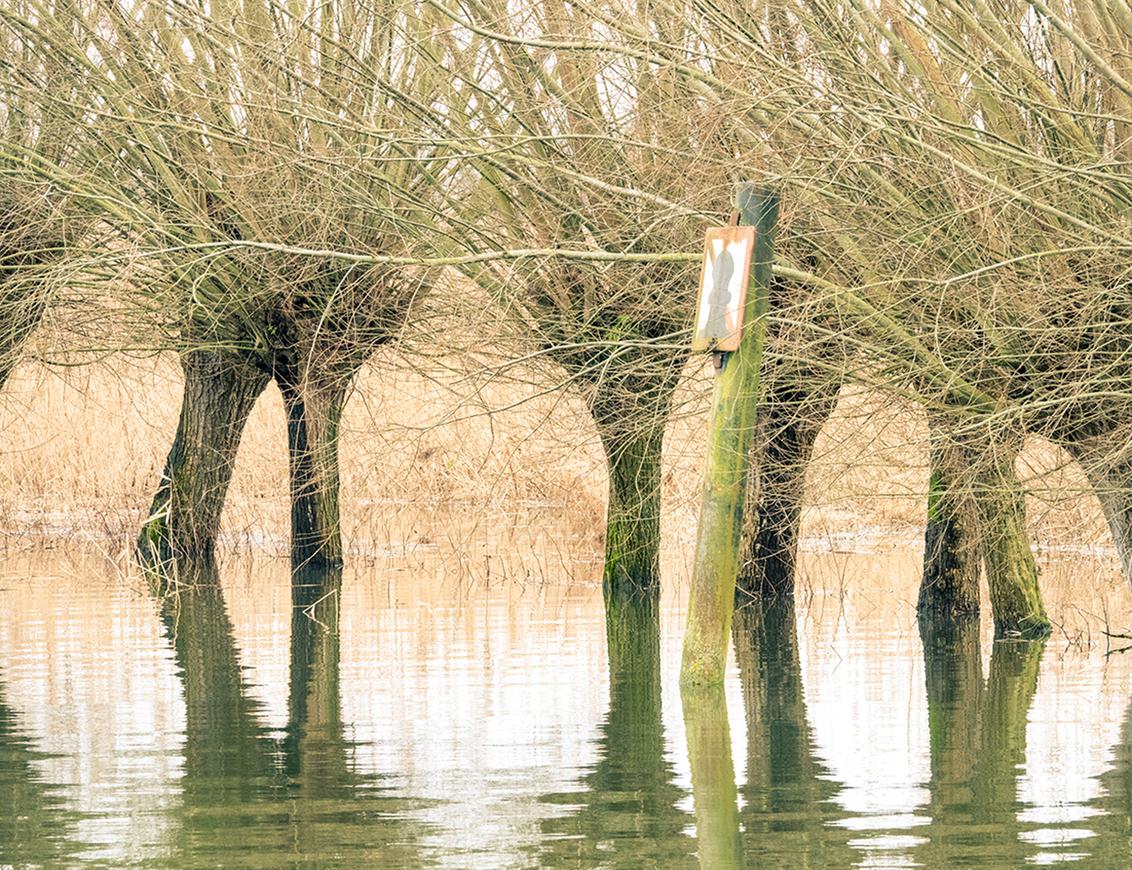 Je mag ook niets meer... - Het Oosthaventje in Dordrecht, Biesbosch, vanmiddag. Meestal kun je langs deze wilgen wandelen, maar nu even niet. Gebeurt vaker in deze tijd van het - foto door PeterKosterHT op 24-01-2021 - deze foto bevat: water, natuur, licht, winter, spiegeling, landschap, bos, bomen, haven, wilgen, dordrecht, biesbosch, dordt, oosthaven, eiland van dordt, hollandse biesboch, sliedrechtse biesbosch, oosthaventje