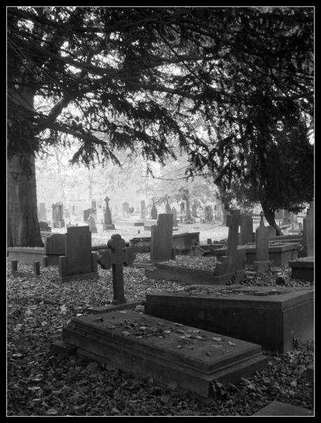 Begraafplaats Daalseweg te Nijmegen