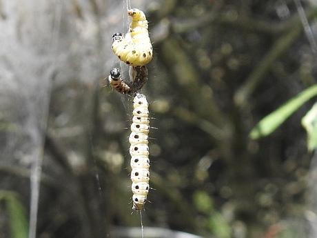 Spinselmot