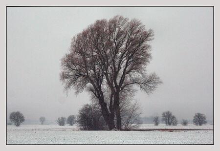Sneeuw in Loppersum - Vandaag sneeuw in Loppersum Gauw naar mijn favoriete boom - foto door Teunis Haveman op 27-01-2021 - deze foto bevat: natuur, sneeuw, bomen