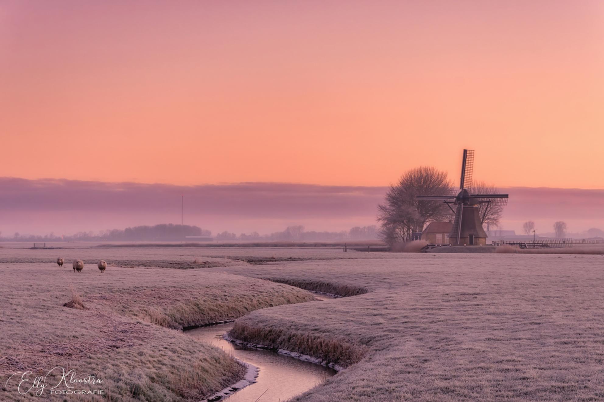 Prachtige zonsopgang - - - foto door Ellyfotografie op 03-03-2021 - deze foto bevat: roze, kleuren, water, schaapjes, winter, ijs, landschap, zonsopkomst, bomen, molen, nederland, friesland