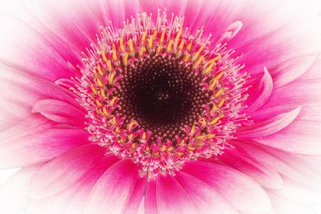 bloemlezing 1