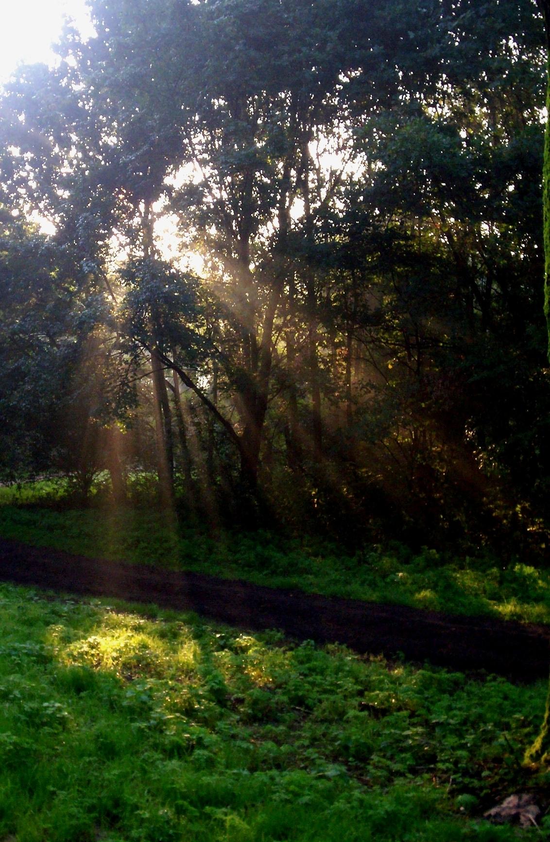 Golden rays - Wanneer het licht zo door de bomen komt in de ochtend... dan pas is het een mooie ochtend! - foto door CoonArt op 20-12-2018 - deze foto bevat: zon, lente, licht, landschap, zomer, voorjaar